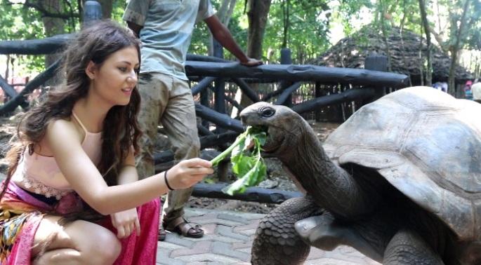 comer tortuga